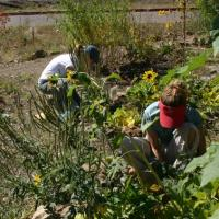 Sustainable Living and Urban Gardening